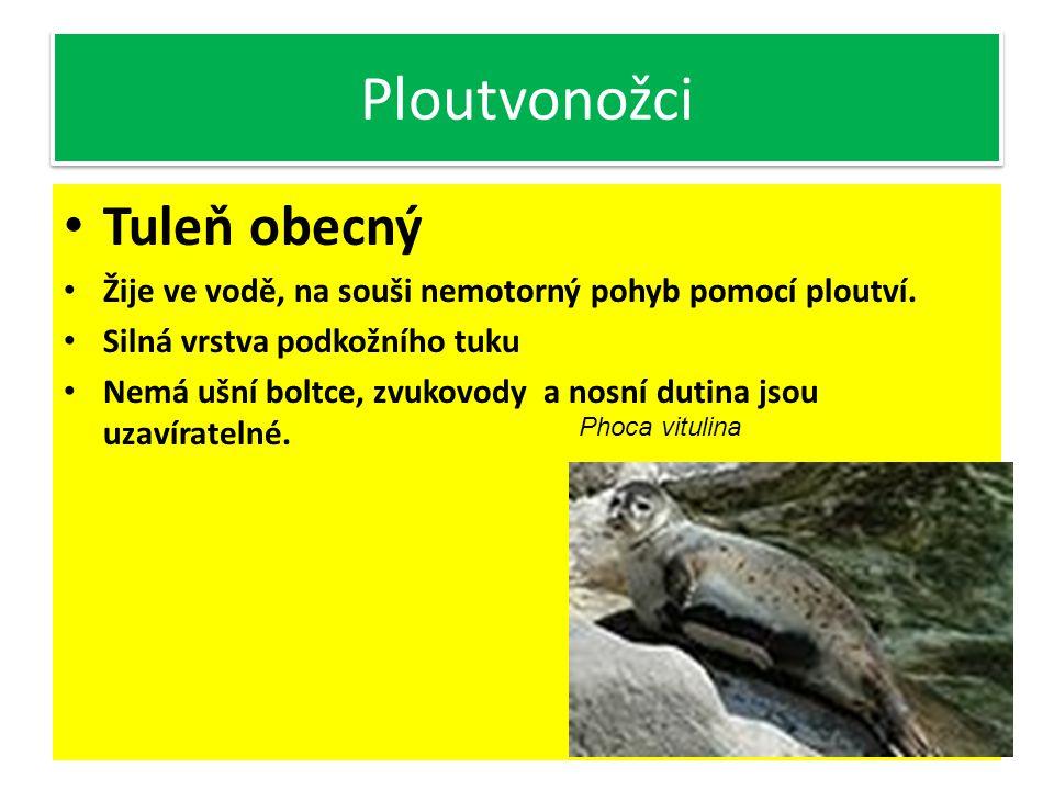 Žijí v chladných mořích v polárních oblastech Zástupci: tuleň, lachtan, mrož