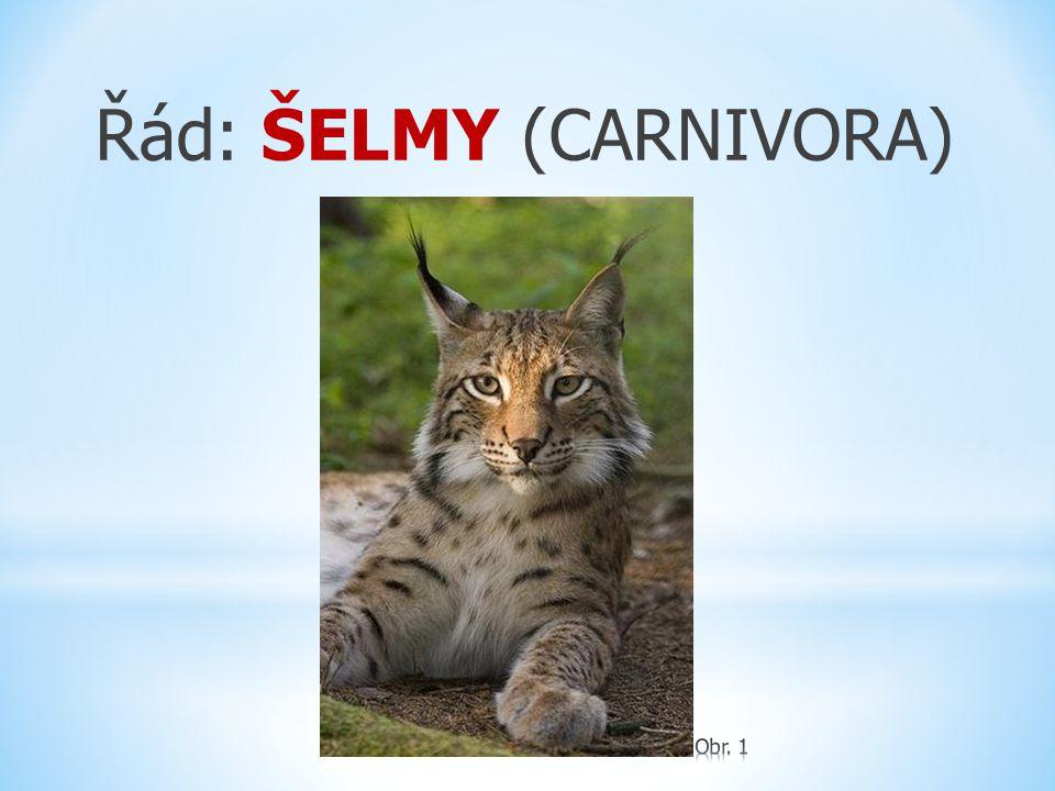 Řád: ŠELMY (Carnivora) Podřád: KOČKOTVÁRNÍ (FELIFORMIA) čeleď: Cibetkovití ( Viverridae ) čeleď: Promykovití ( Herpestidae ) čeleď: Kočkovití ( Felidae ) (malé a velké kočky) čeleď: Hyenovití ( Hyaenidae ),..