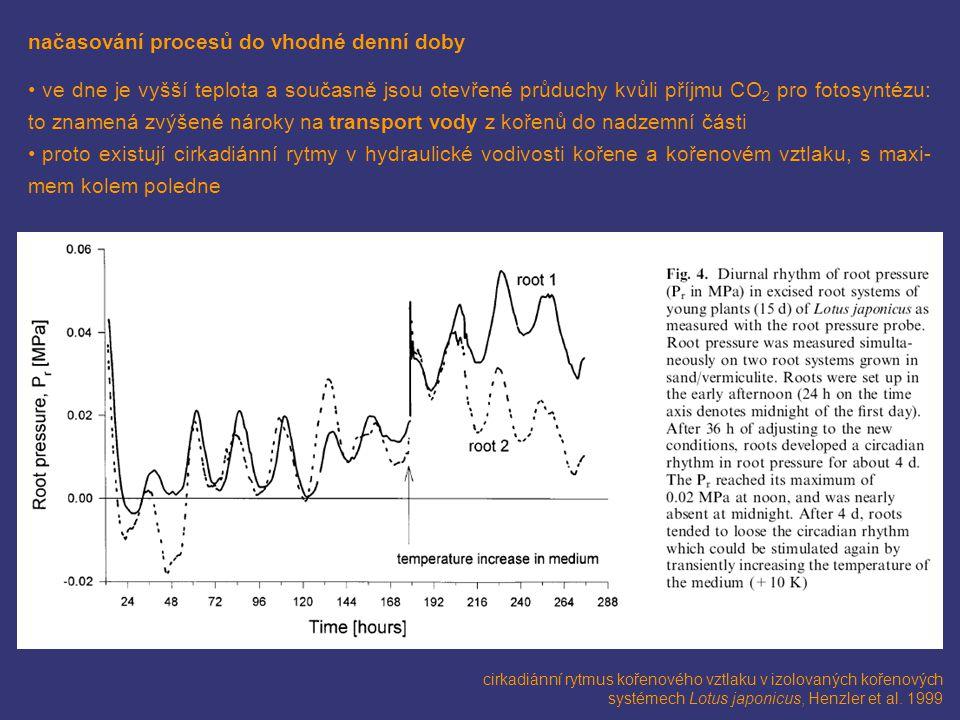 načasování procesů do vhodné denní doby ve dne je vyšší teplota a současně jsou otevřené průduchy kvůli příjmu CO 2 pro fotosyntézu: to znamená zvýšen