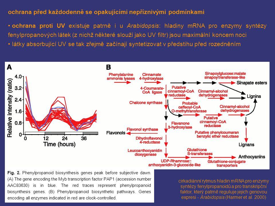 ochrana před každodenně se opakujícími nepříznivými podmínkami ochrana proti UV existuje patrně i u Arabidopsis: hladiny mRNA pro enzymy syntézy fenyl