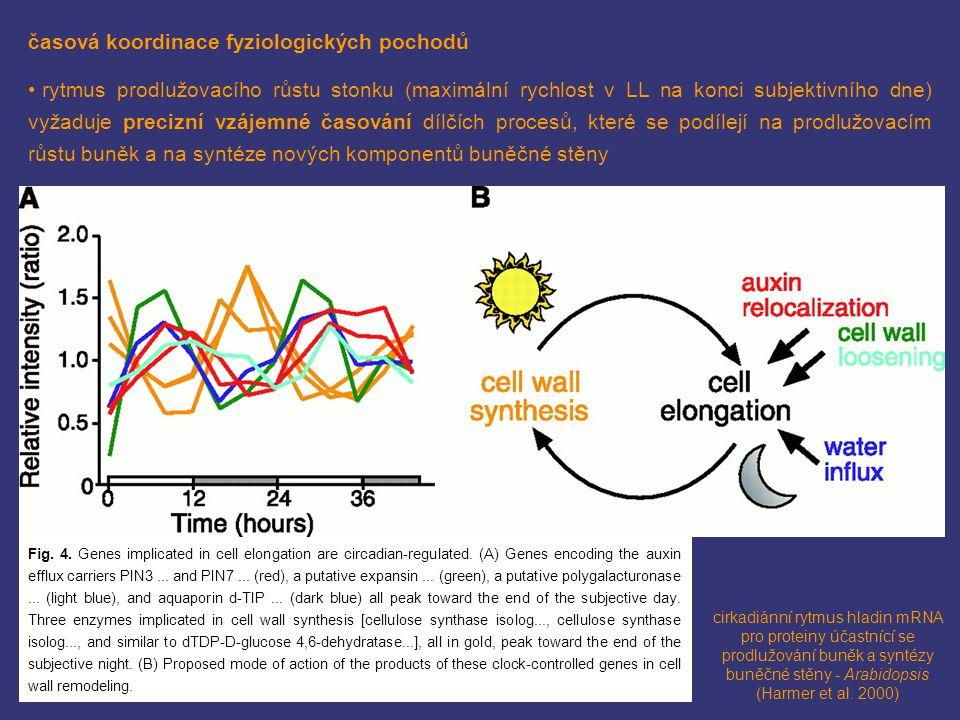 časová koordinace fyziologických pochodů rytmus prodlužovacího růstu stonku (maximální rychlost v LL na konci subjektivního dne) vyžaduje precizní vzá