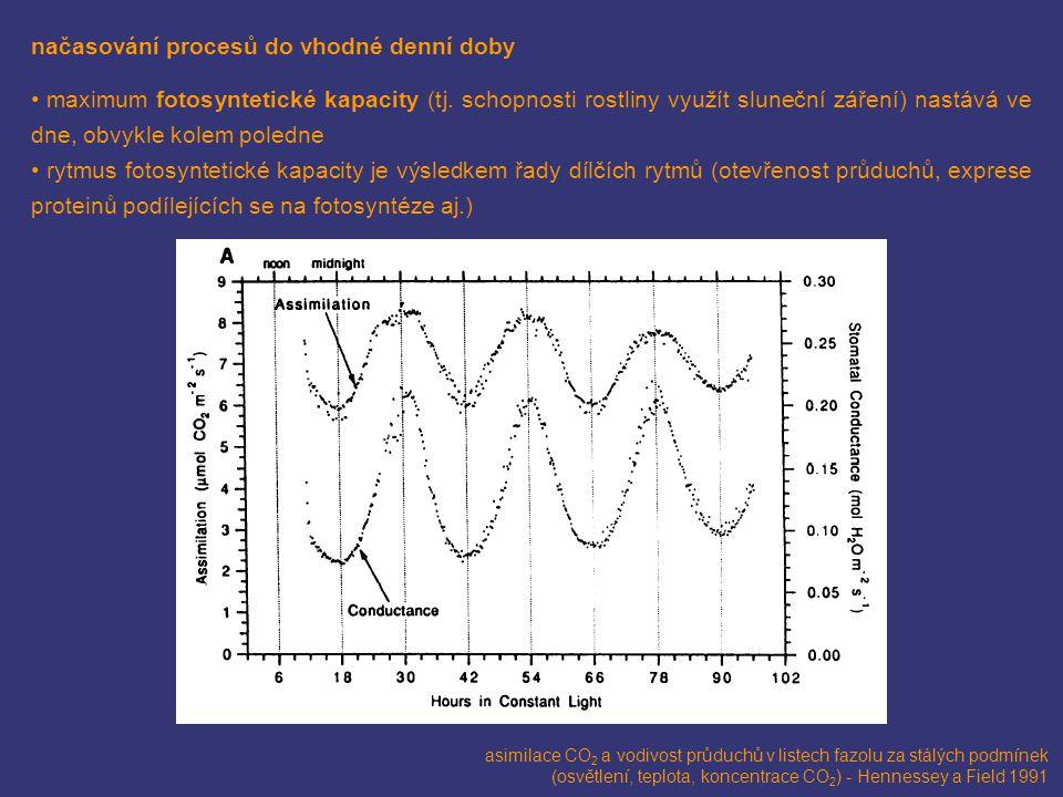 načasování procesů do vhodné denní doby maximum fotosyntetické kapacity (tj. schopnosti rostliny využít sluneční záření) nastává ve dne, obvykle kolem