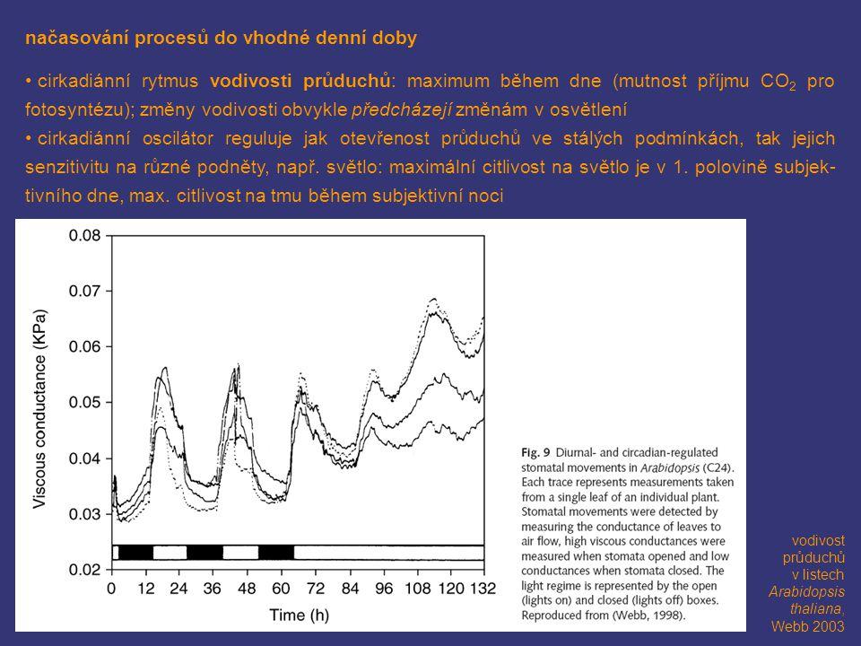 načasování procesů do vhodné denní doby cirkadiánní rytmus vodivosti průduchů: maximum během dne (mutnost příjmu CO 2 pro fotosyntézu); změny vodivost