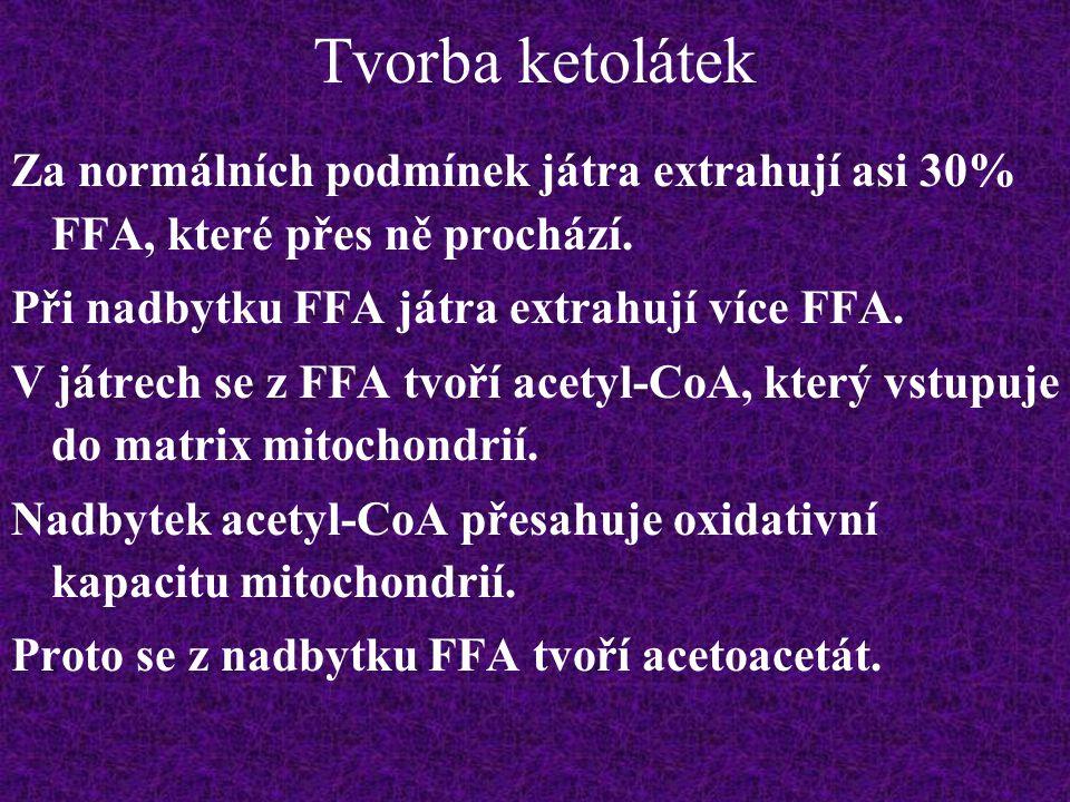 Tvorba ketolátek Za normálních podmínek játra extrahují asi 30% FFA, které přes ně prochází. Při nadbytku FFA játra extrahují více FFA. V játrech se z