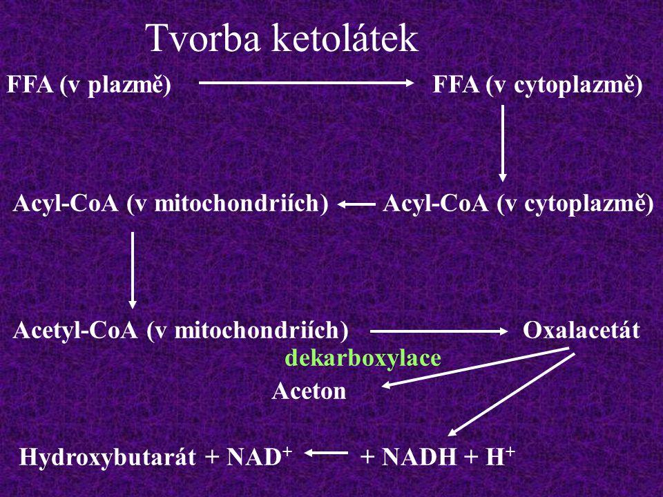 Tvorba ketolátek FFA (v plazmě)FFA (v cytoplazmě) Acyl-CoA (v cytoplazmě)Acyl-CoA (v mitochondriích) Acetyl-CoA (v mitochondriích)Oxalacetát Hydroxybu