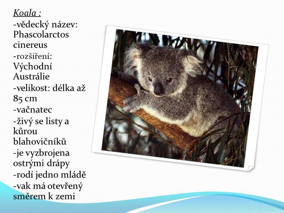 Koala : -vědecký název: Phascolarctos cinereus - rozšíření : Východní Austrálie -velikost: délka až 85 cm -vačnatec -živý se listy a kůrou blahovičníků -je vyzbrojena ostrými drápy -rodí jedno mládě -vak má otevřený směrem k zemi