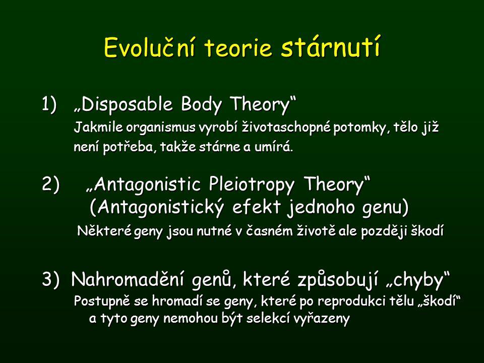 """Evoluční teorie stárnutí 1)""""Disposable Body Theory"""" Jakmile organismus vyrobí životaschopné potomky, tělo již není potřeba, takže stárne a umírá. 2)""""A"""