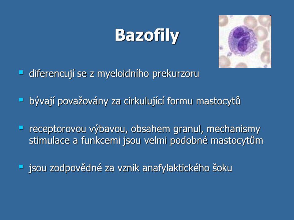 Bazofily  diferencují se z myeloidního prekurzoru  bývají považovány za cirkulující formu mastocytů  receptorovou výbavou, obsahem granul, mechanis