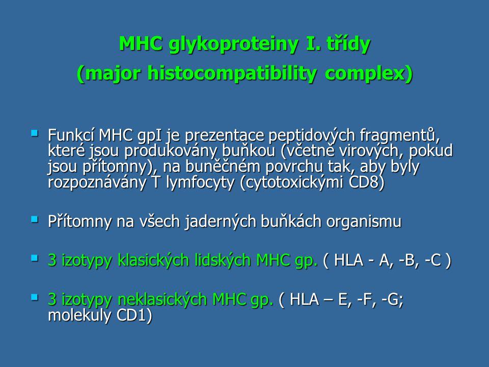 MHC glykoproteiny I. třídy (major histocompatibility complex)  Funkcí MHC gpI je prezentace peptidových fragmentů, které jsou produkovány buňkou (vče