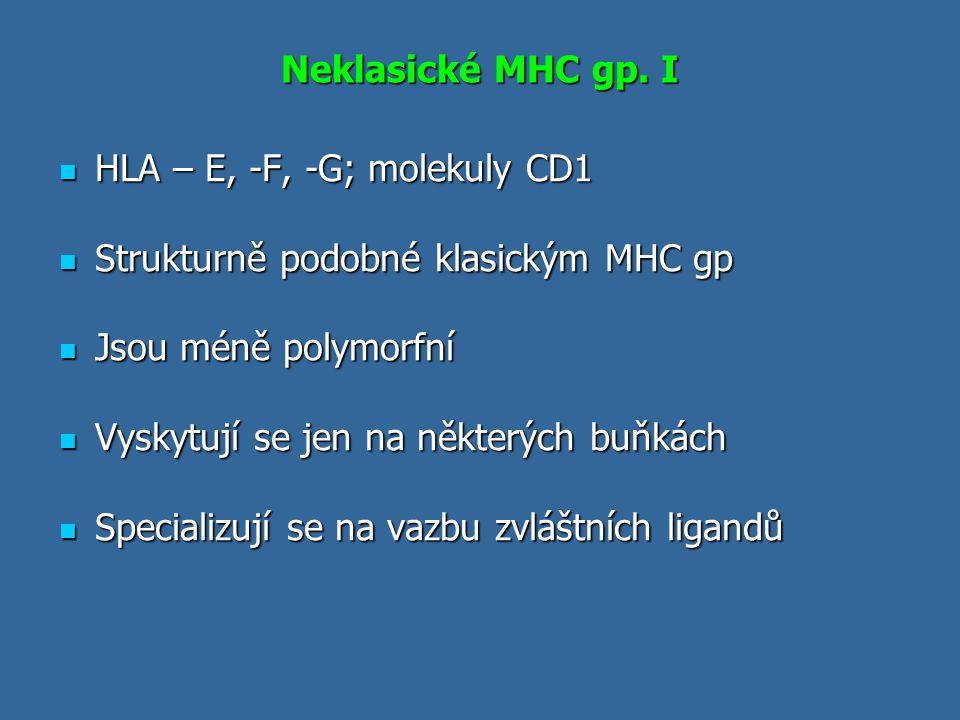 Neklasické MHC gp. I HLA – E, -F, -G; molekuly CD1 HLA – E, -F, -G; molekuly CD1 Strukturně podobné klasickým MHC gp Strukturně podobné klasickým MHC