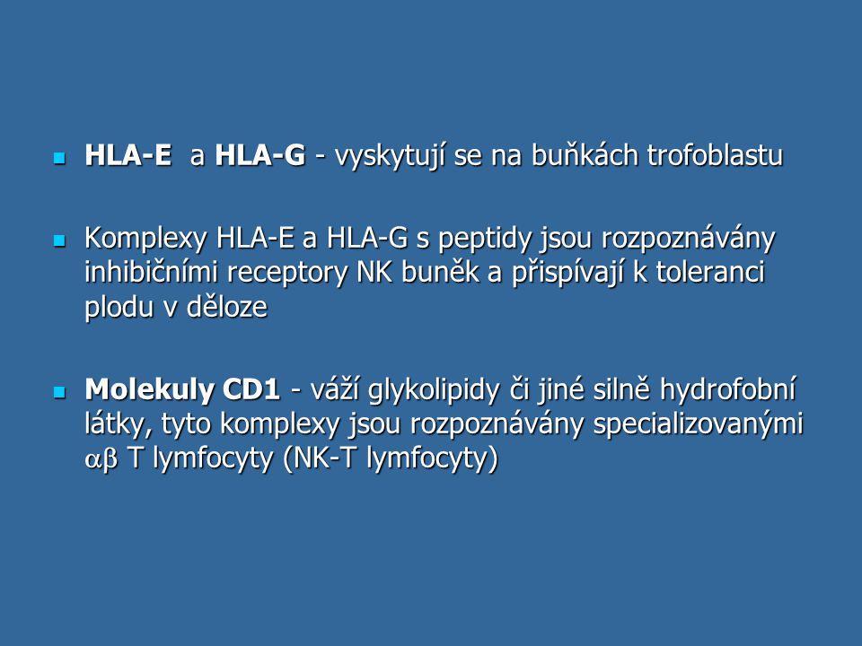 HLA-E a HLA-G - vyskytují se na buňkách trofoblastu HLA-E a HLA-G - vyskytují se na buňkách trofoblastu Komplexy HLA-E a HLA-G s peptidy jsou rozpozná