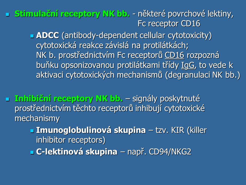 Vazba peptidů na MHC gp II MHC gp II váží peptidy o délce 15 až 35 AK (ale i delší - vazebné místo pro peptid je na obou koncích otevřené) MHC gp II váží peptidy o délce 15 až 35 AK (ale i delší - vazebné místo pro peptid je na obou koncích otevřené) Určitá molekula MHC gp váže peptidy sdílející společné strukturní rysy - vazebný motiv Určitá molekula MHC gp váže peptidy sdílející společné strukturní rysy - vazebný motiv Po vytvoření řetězce  a  v ER dochází k poskládání do správné konformace a k vzájemné asociaci a k připojení dalšího transmembránového řetězce, tzv.