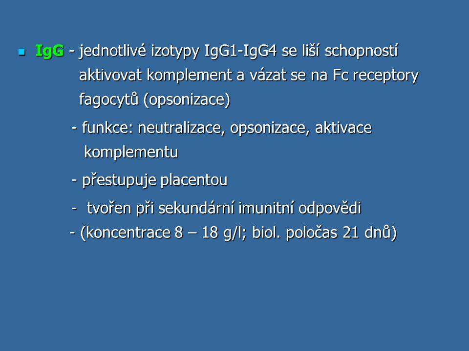 IgG - jednotlivé izotypy IgG1-IgG4 se liší schopností aktivovat komplement a vázat se na Fc receptory fagocytů (opsonizace) IgG - jednotlivé izotypy I