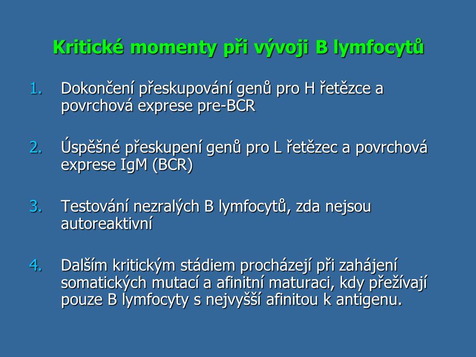 Kritické momenty při vývoji B lymfocytů 1.Dokončení přeskupování genů pro H řetězce a povrchová exprese pre-BCR 2.Úspěšné přeskupení genů pro L řetěze