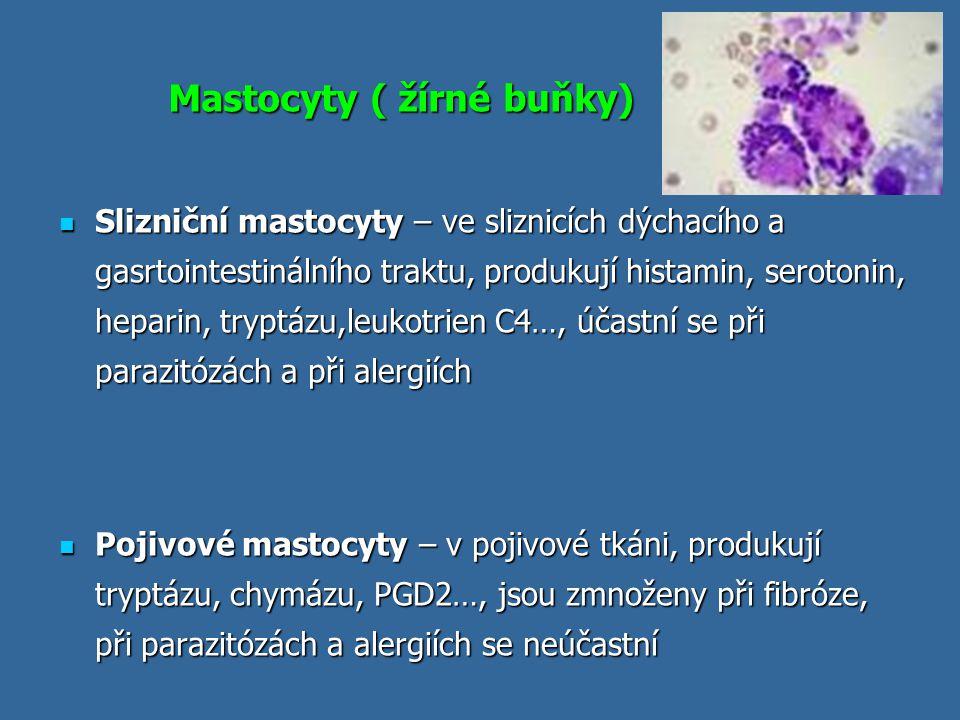 Funkce mastocytů obrana proti parazitárním infekcím obrana proti parazitárním infekcím za patologických okolností jsou zodpovědné za časný typ přecitlivělosti (imunopatologická reakce typu I) za patologických okolností jsou zodpovědné za časný typ přecitlivělosti (imunopatologická reakce typu I) regulace imunitní odpovědi regulace imunitní odpovědi uplatňují se při zánětu, při angiogenezi, při remodelaci tkání uplatňují se při zánětu, při angiogenezi, při remodelaci tkání podílejí se na udržování fyziologických funkcí sliznic podílejí se na udržování fyziologických funkcí sliznic přispívají k normálnímu metabolismu pojivových tkání přispívají k normálnímu metabolismu pojivových tkání komunikace mezi imunitním a nervovým systémem komunikace mezi imunitním a nervovým systémem