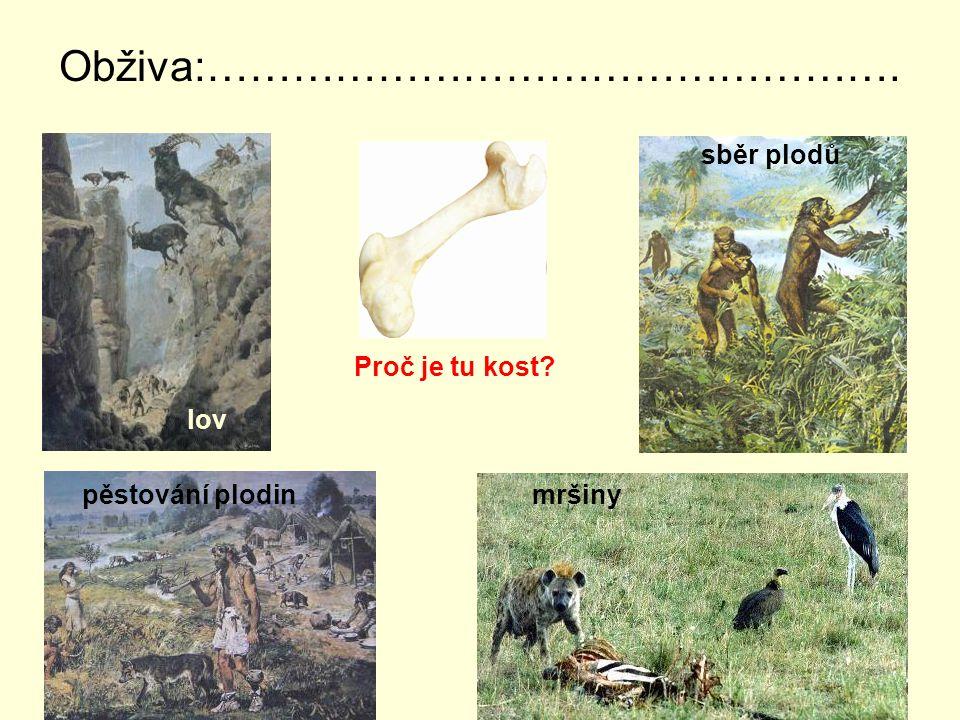 Obživa:…………………………………………. lov sběr plodů pěstování plodin mršiny Proč je tu kost?