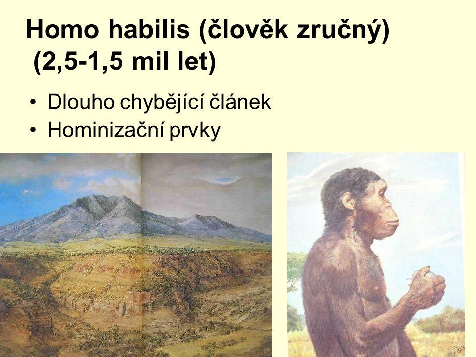 Homo habilis (člověk zručný) (2,5-1,5 mil let) Dlouho chybějící článek Hominizační prvky