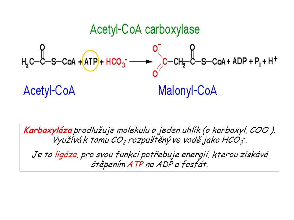 Karboxyláza prodlužuje molekulu o jeden uhlík (o karboxyl, COO - ). Využívá k tomu CO 2 rozpuštěný ve vodě jako HCO 3 -. Je to ligáza, pro svou funkci