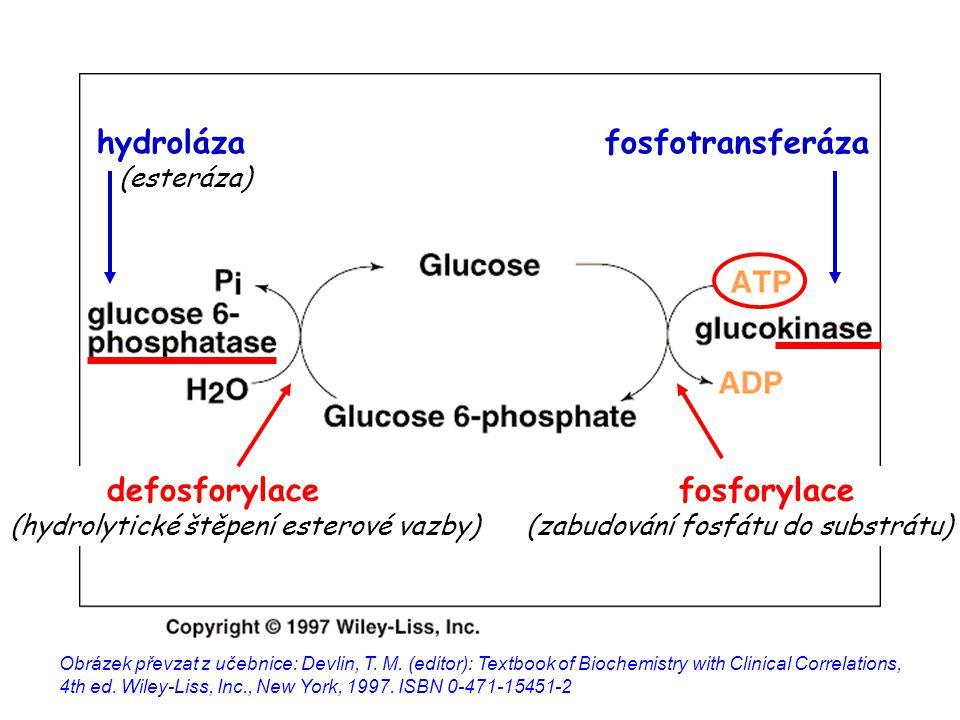 Vyberte pravdivé(á) tvrzení: a)dehydrogenázy se účastní oxidačně- redukčních reakcí b)karboxylázy potřebují pro svou funkci ATP c)kinázy přenášejí fosfát z makroergní sloučeniny do substrátu d)hydroxylázy katalyzují oxidaci substrátu