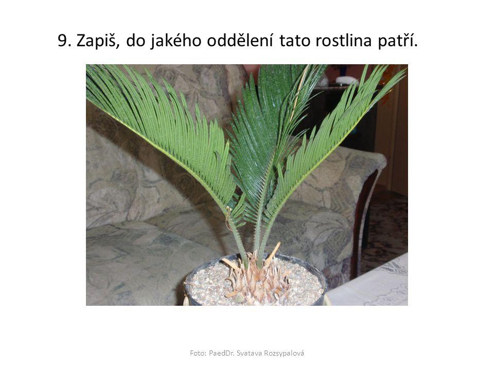 Foto: PaedDr. Svatava Rozsypalová 9. Zapiš, do jakého oddělení tato rostlina patří.