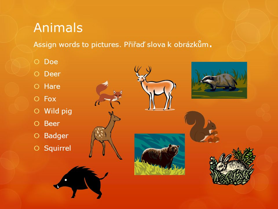 Animals Assign words to pictures.Přiřaď slova k obrázkům.
