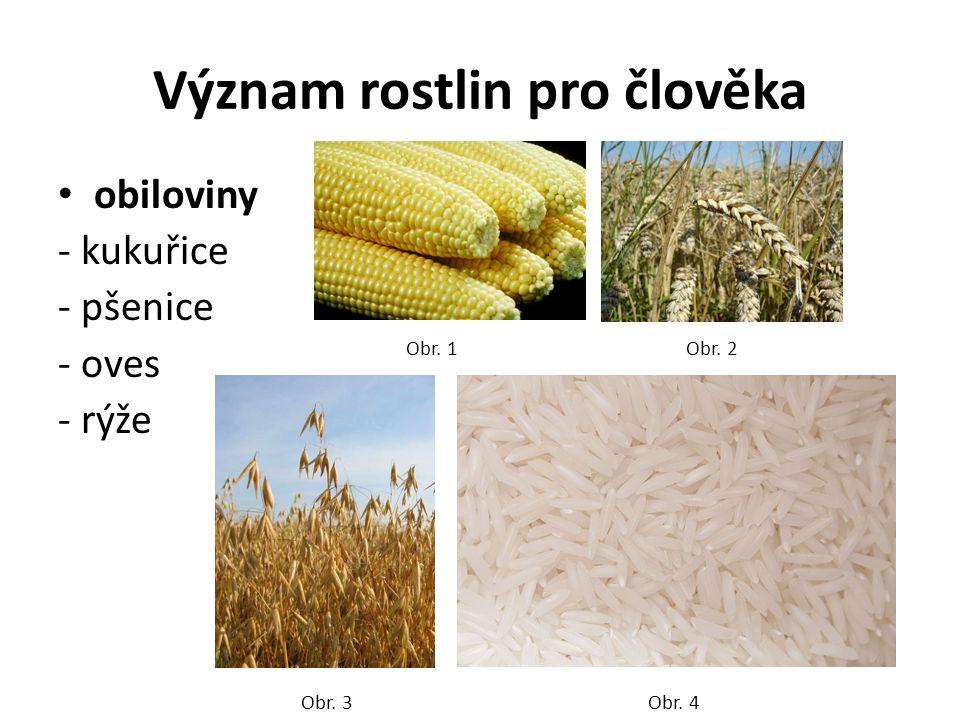 Význam rostlin pro člověka obiloviny - kukuřice - pšenice - oves - rýže Obr. 1Obr. 2 Obr. 3Obr. 4