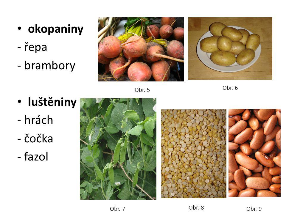 okopaniny - řepa - brambory luštěniny - hrách - čočka - fazol Obr. 5 Obr. 6 Obr. 7 Obr. 8 Obr. 9