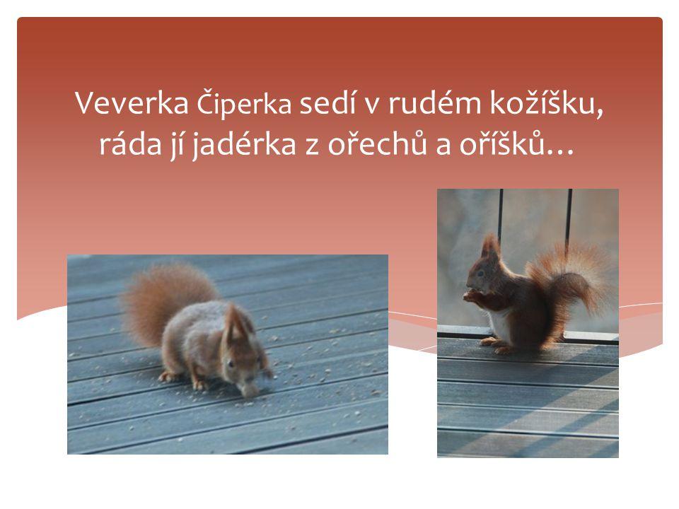 Veverka Čiperka sedí v rudém kožíšku, ráda jí jadérka z ořechů a oříšků…