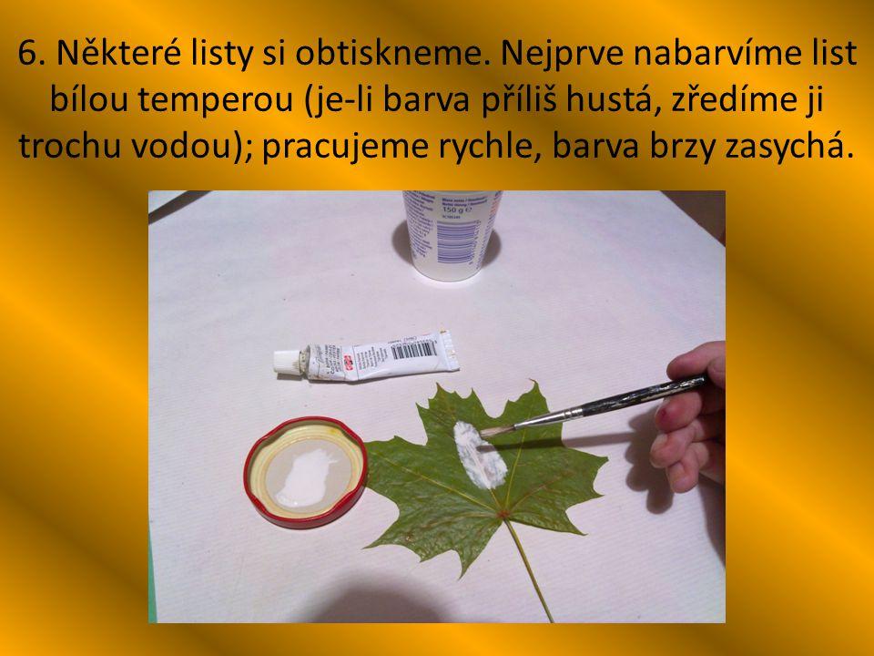 6. Některé listy si obtiskneme. Nejprve nabarvíme list bílou temperou (je-li barva příliš hustá, zředíme ji trochu vodou); pracujeme rychle, barva brz