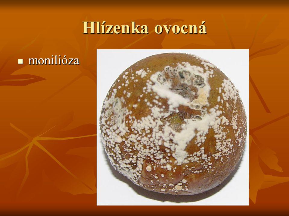 Hlízenka ovocná monilióza monilióza