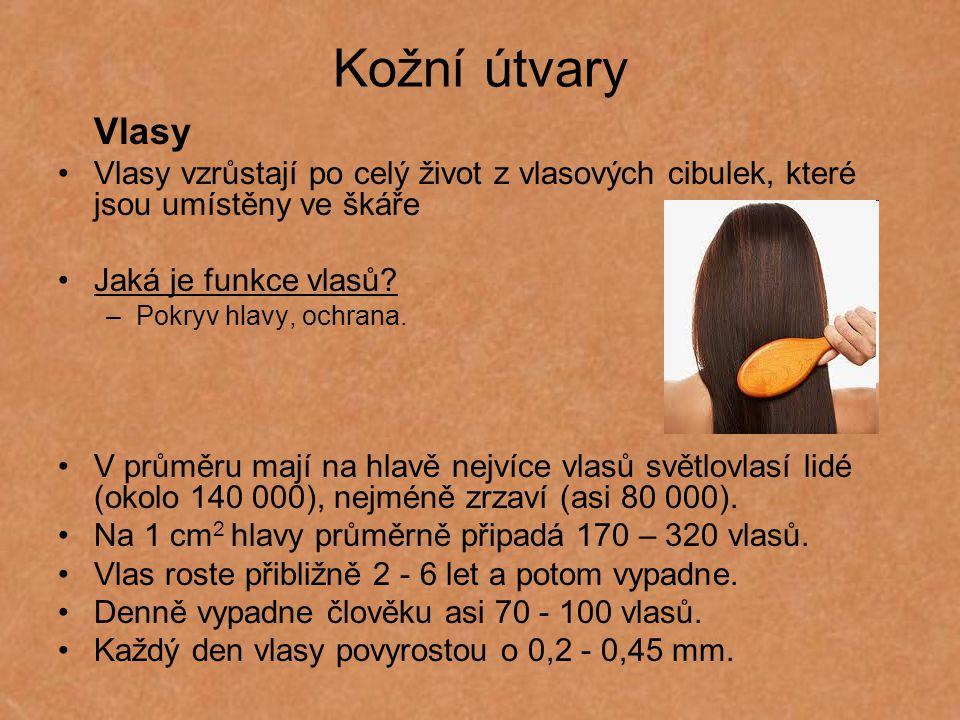 Kožní útvary Vlasy Vlasy vzrůstají po celý život z vlasových cibulek, které jsou umístěny ve škáře Jaká je funkce vlasů? –Pokryv hlavy, ochrana. V prů