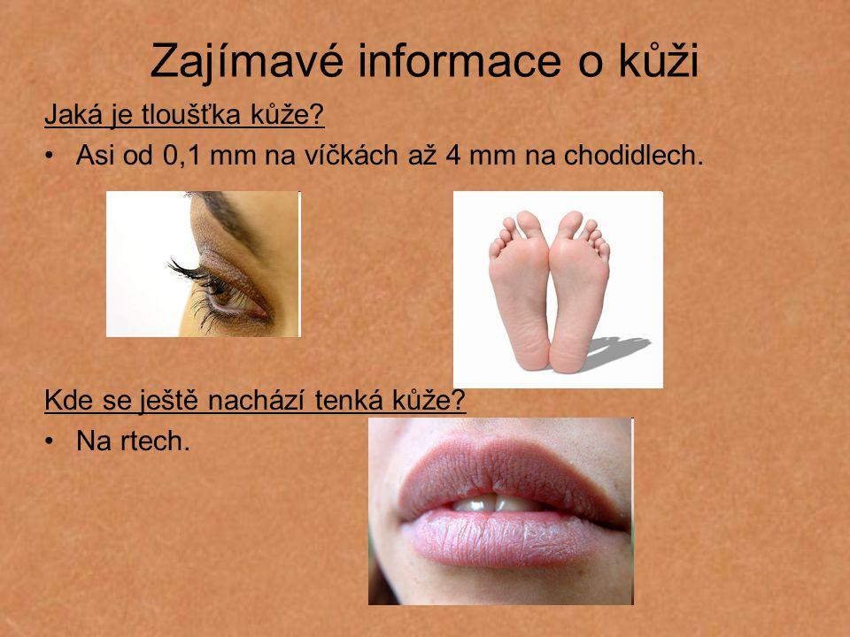 Zajímavé informace o kůži Jaká je tloušťka kůže? Asi od 0,1 mm na víčkách až 4 mm na chodidlech. Kde se ještě nachází tenká kůže? Na rtech.