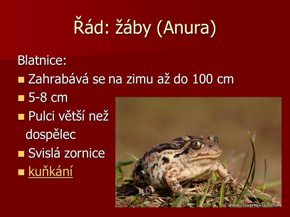 Řád: žáby (Anura) Kuňky: maximální velikosti 5 cm maximální velikosti 5 cm varovné zbarvení břicha varovné zbarvení břicha Nepohyblivý jazyk Nepohybli