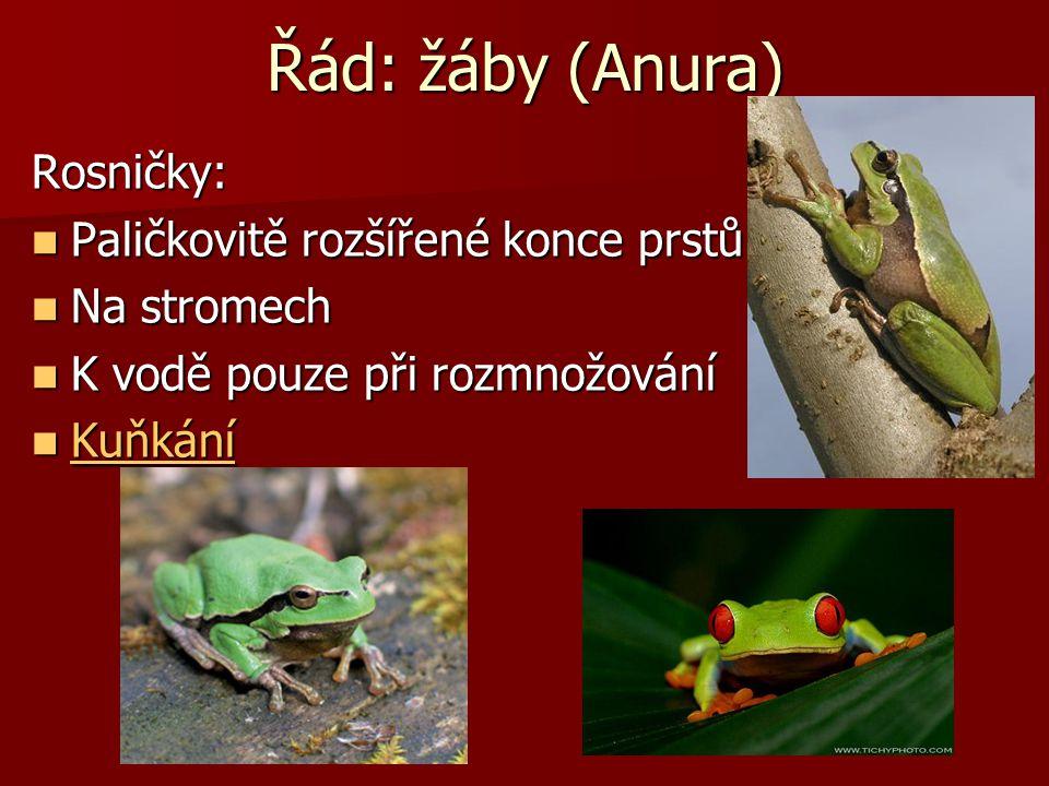 Řád: žáby (Anura) Ropuchy: Zavalité tělo Zavalité tělo Krátké nohy Krátké nohy Bradavičnatá kůže Bradavičnatá kůže Jedovatý sekret Jedovatý sekret Vod