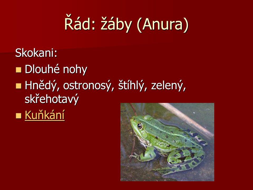 Řád: žáby (Anura) Rosničky: Paličkovitě rozšířené konce prstů Paličkovitě rozšířené konce prstů Na stromech Na stromech K vodě pouze při rozmnožování