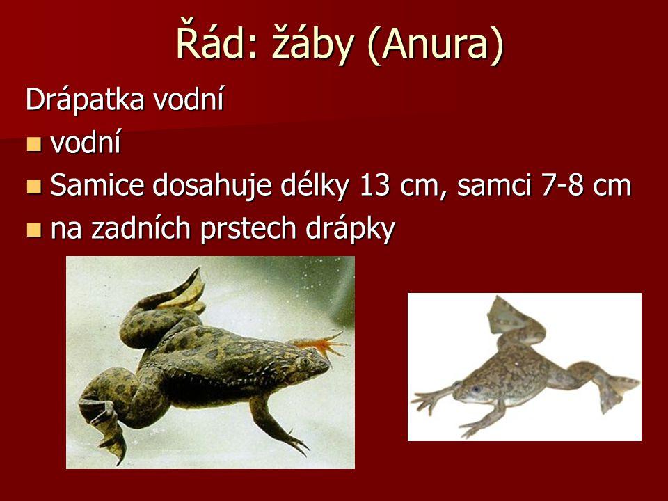 Řád: žáby (Anura) Skokani: Dlouhé nohy Dlouhé nohy Hnědý, ostronosý, štíhlý, zelený, skřehotavý Hnědý, ostronosý, štíhlý, zelený, skřehotavý Kuňkání K