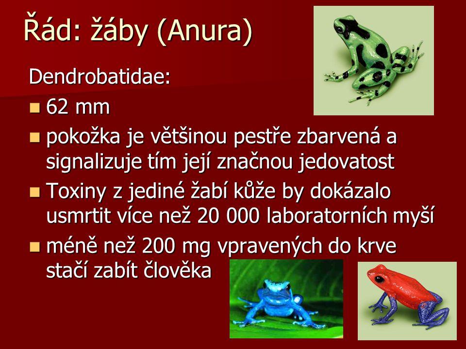 Řád: žáby (Anura) Pipa: vodní vodní samec oplodňuje a zamačkává vajíčka do kůže na hřbetu samice, malé žabky opouští matku až když jsou plně vyvinuté