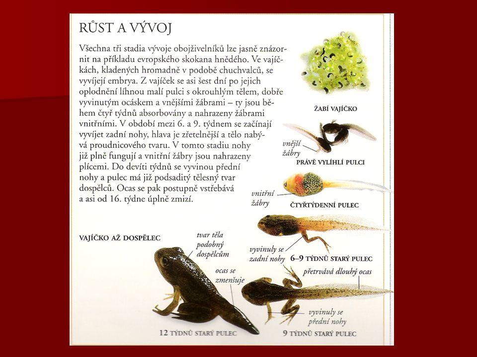 Rozmnožování: - přes larvální Vývoj je primárně nepřímý- přes larvální stádium – pulce stádium – pulce Žáby: oplození vnější Čolci: oplození vnitřní Č