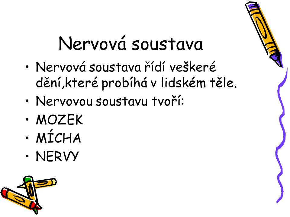 Nervová soustava Nervová soustava řídí veškeré dění,které probíhá v lidském těle. Nervovou soustavu tvoří: MOZEK MÍCHA NERVY