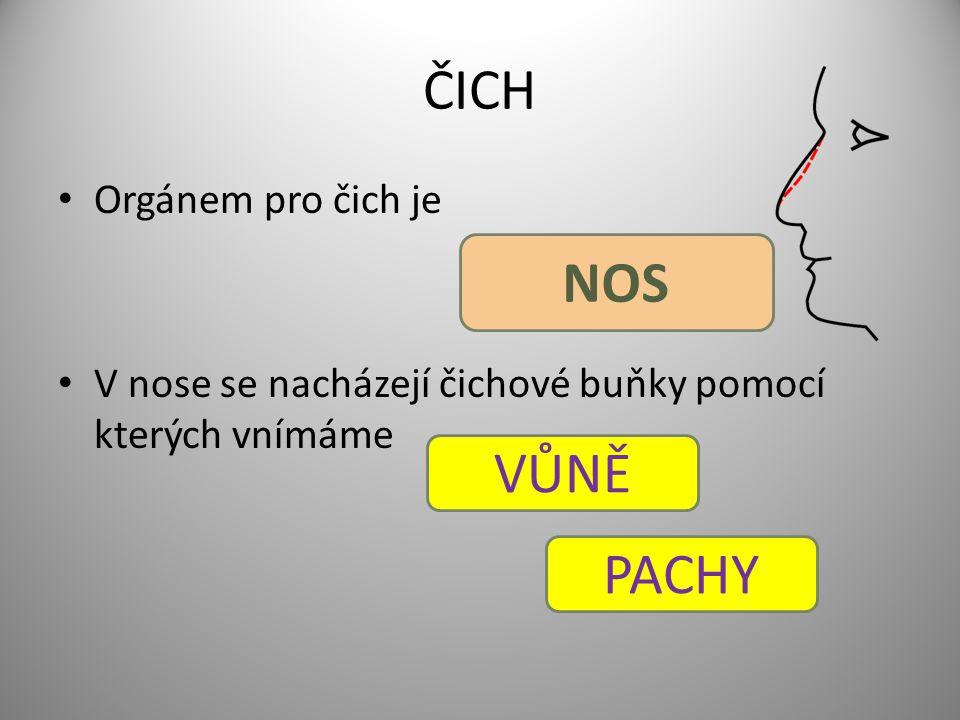 ČICH Orgánem pro čich je V nose se nacházejí čichové buňky pomocí kterých vnímáme NOS VŮNĚ PACHY