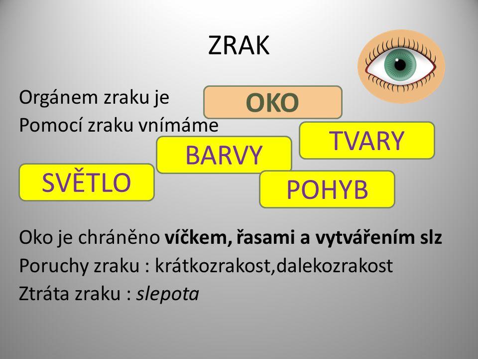 ZRAK Orgánem zraku je Pomocí zraku vnímáme Oko je chráněno víčkem, řasami a vytvářením slz Poruchy zraku : krátkozrakost,dalekozrakost Ztráta zraku :