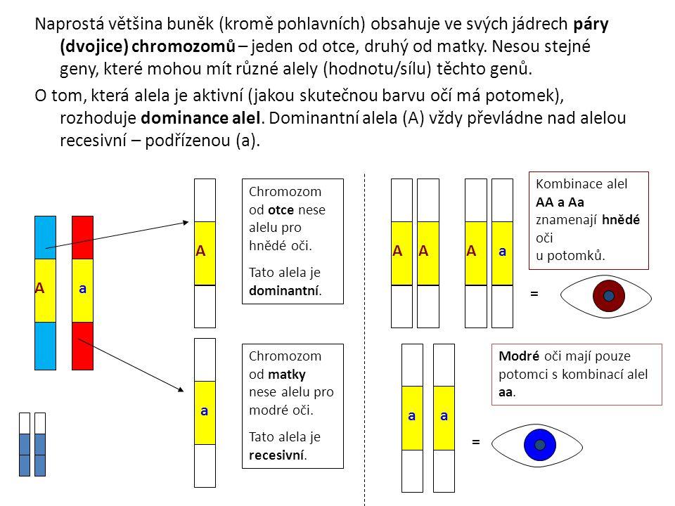 Naprostá většina buněk (kromě pohlavních) obsahuje ve svých jádrech páry (dvojice) chromozomů – jeden od otce, druhý od matky. Nesou stejné geny, kter