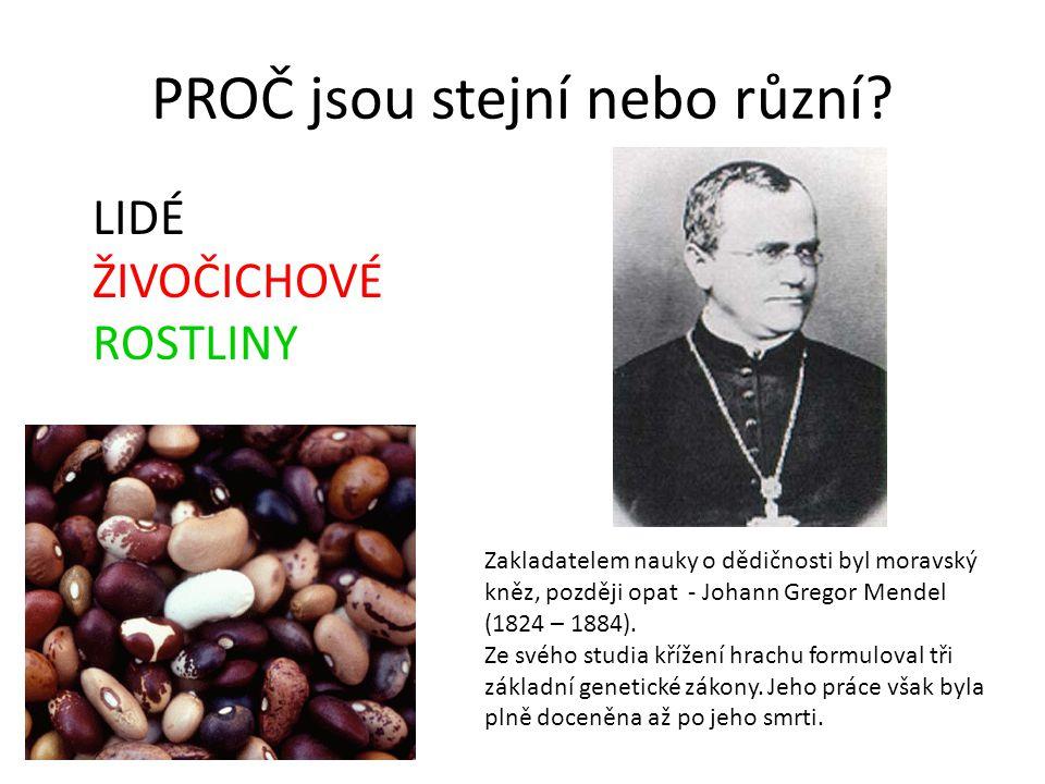 PROČ jsou stejní nebo různí? Zakladatelem nauky o dědičnosti byl moravský kněz, později opat - Johann Gregor Mendel (1824 – 1884). Ze svého studia kří