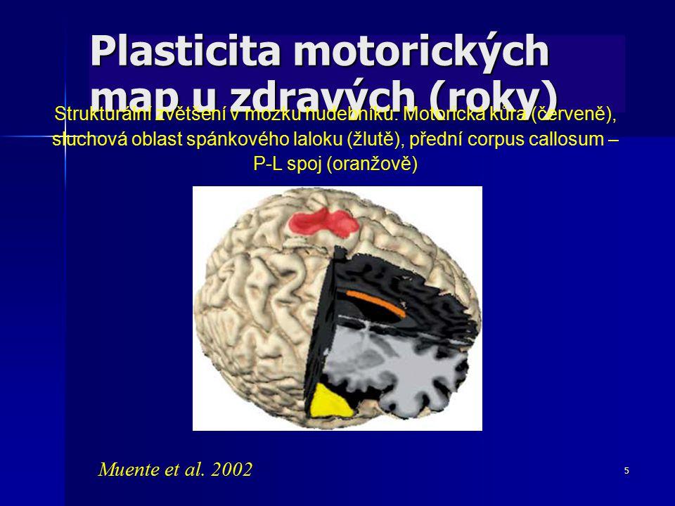 5 Plasticita motorických map u zdravých (roky) Strukturální zvětšení v mozku hudebníků: Motorická kůra (červeně), sluchová oblast spánkového laloku (ž