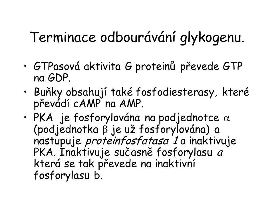 Terminace odbourávání glykogenu. GTPasová aktivita G proteinů převede GTP na GDP. Buňky obsahují také fosfodiesterasy, které převádí cAMP na AMP. PKA