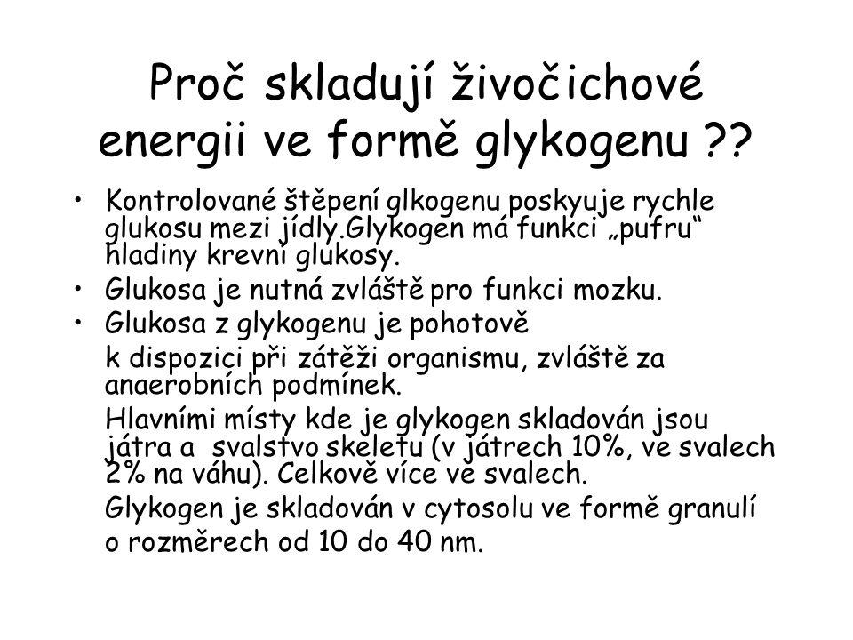 """Proč skladují živočichové energii ve formě glykogenu ?? Kontrolované štěpení glkogenu poskyuje rychle glukosu mezi jídly.Glykogen má funkci """"pufru"""" hl"""