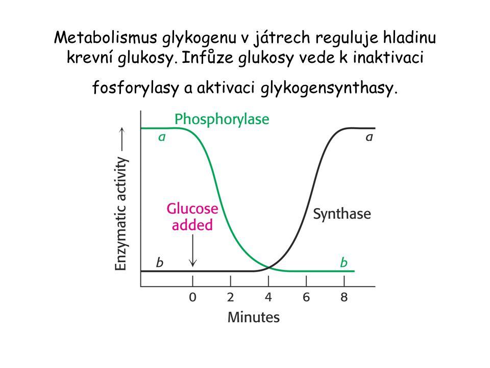 Metabolismus glykogenu v játrech reguluje hladinu krevní glukosy. Infůze glukosy vede k inaktivaci fosforylasy a aktivaci glykogensynthasy.