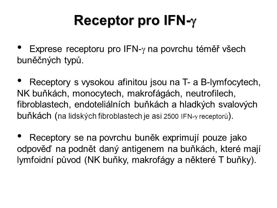 Receptor pro IFN-  Exprese receptoru pro IFN-  na povrchu téměř všech buněčných typů. Receptory s vysokou afinitou jsou na T- a B-lymfocytech, NK bu
