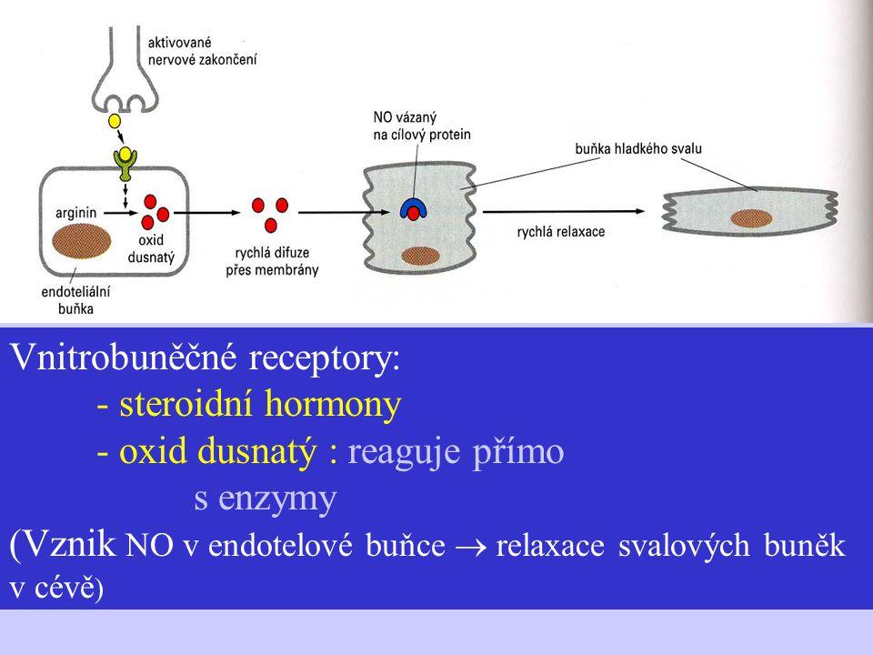 Vnitrobuněčné receptory: - steroidní hormony - oxid dusnatý : reaguje přímo s enzymy (Vznik NO v endotelové buňce  relaxace svalových buněk v cévě )