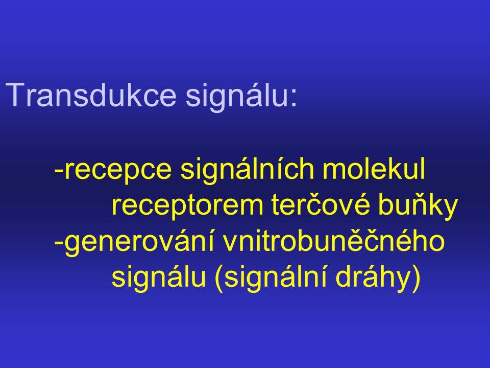 Transdukce signálu: -recepce signálních molekul receptorem terčové buňky -generování vnitrobuněčného signálu (signální dráhy)